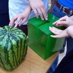 Square Watermelon Box